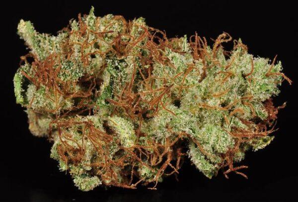ak 47 strain