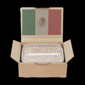 Magic Mushroom Grow Kit Mexican by Mondo®