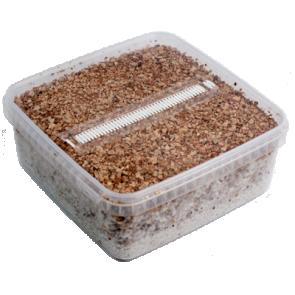 Magic Mushroom Grow Kit PES Amazon XL by Mondo®